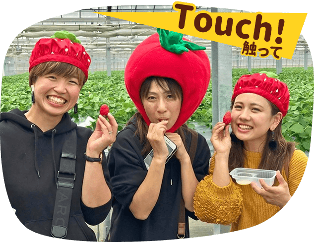 Touch!触って
